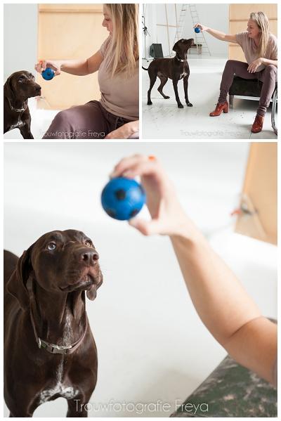 Hond Bruin met blauwe bal