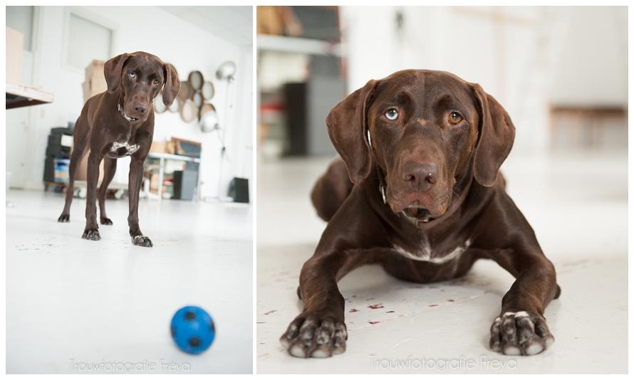 Bruin, de hond van de fotograaf