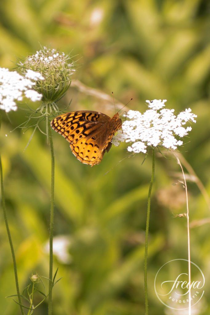 vlinder in Blue Ridge Mountains