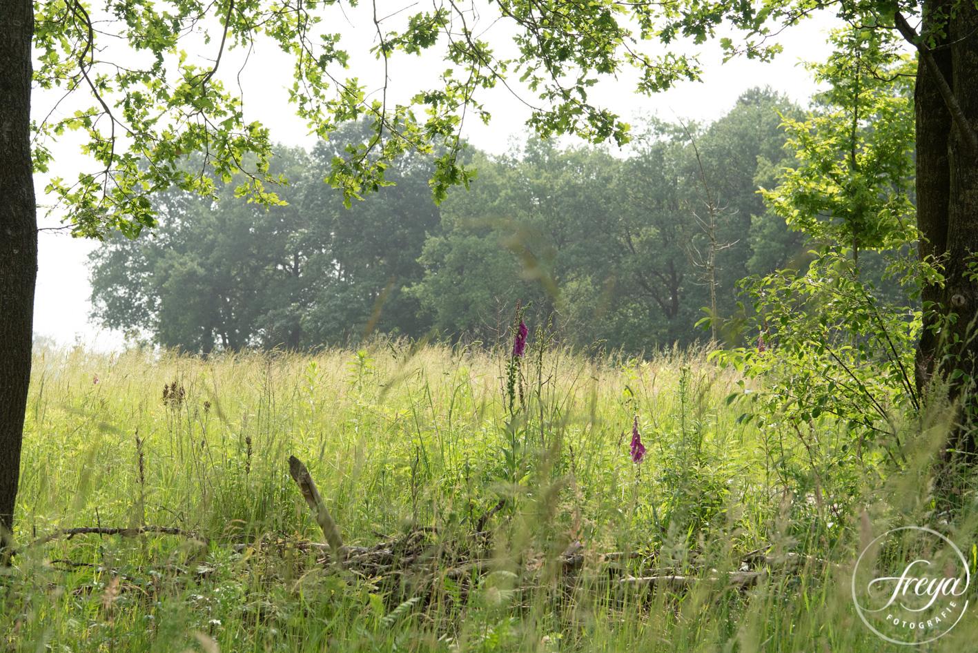 natuurbegraafplaats Maashorst doorkijkje naar weide