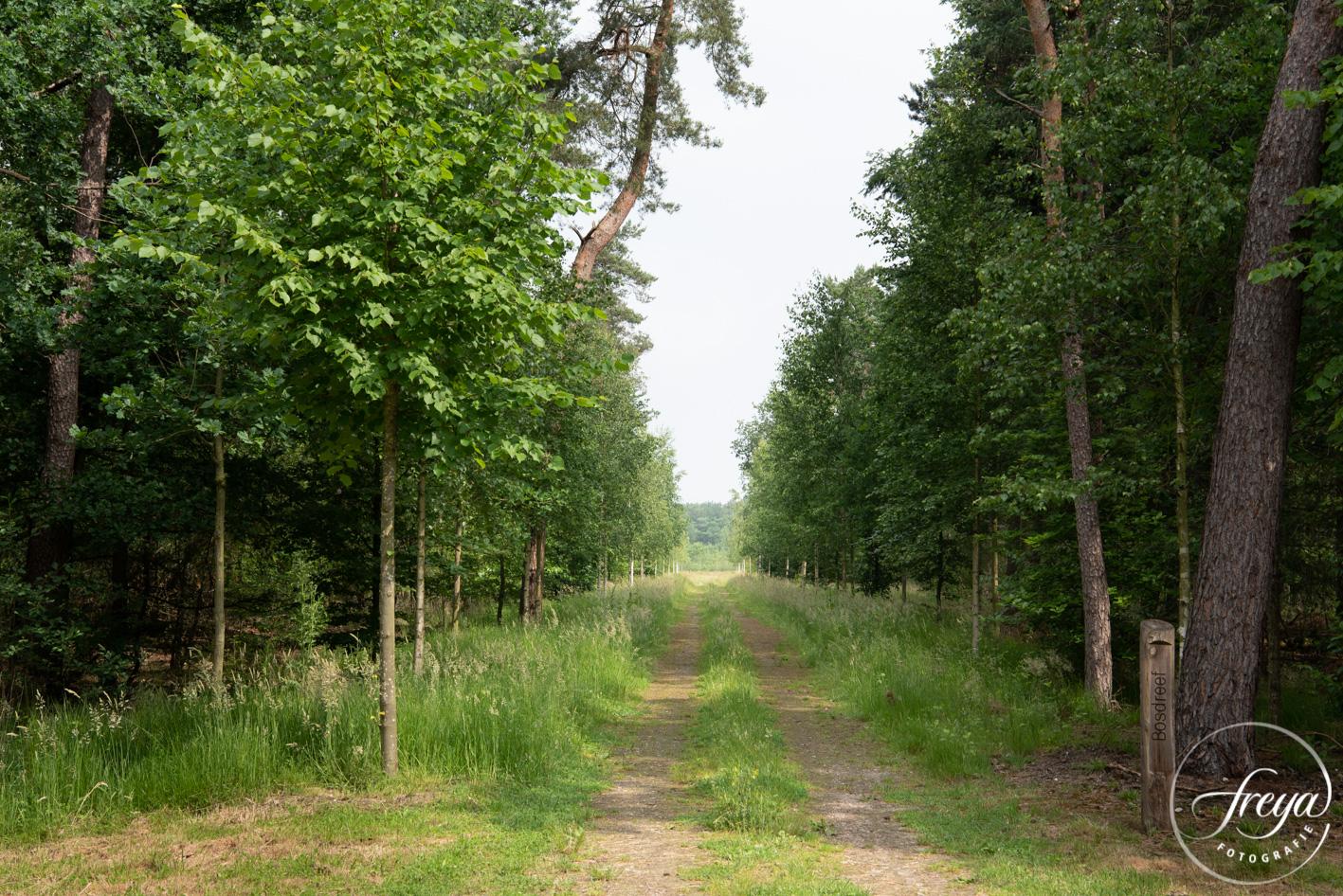 Natuurbegraafplaats Maashorst te Schaik - de paden hebben namen