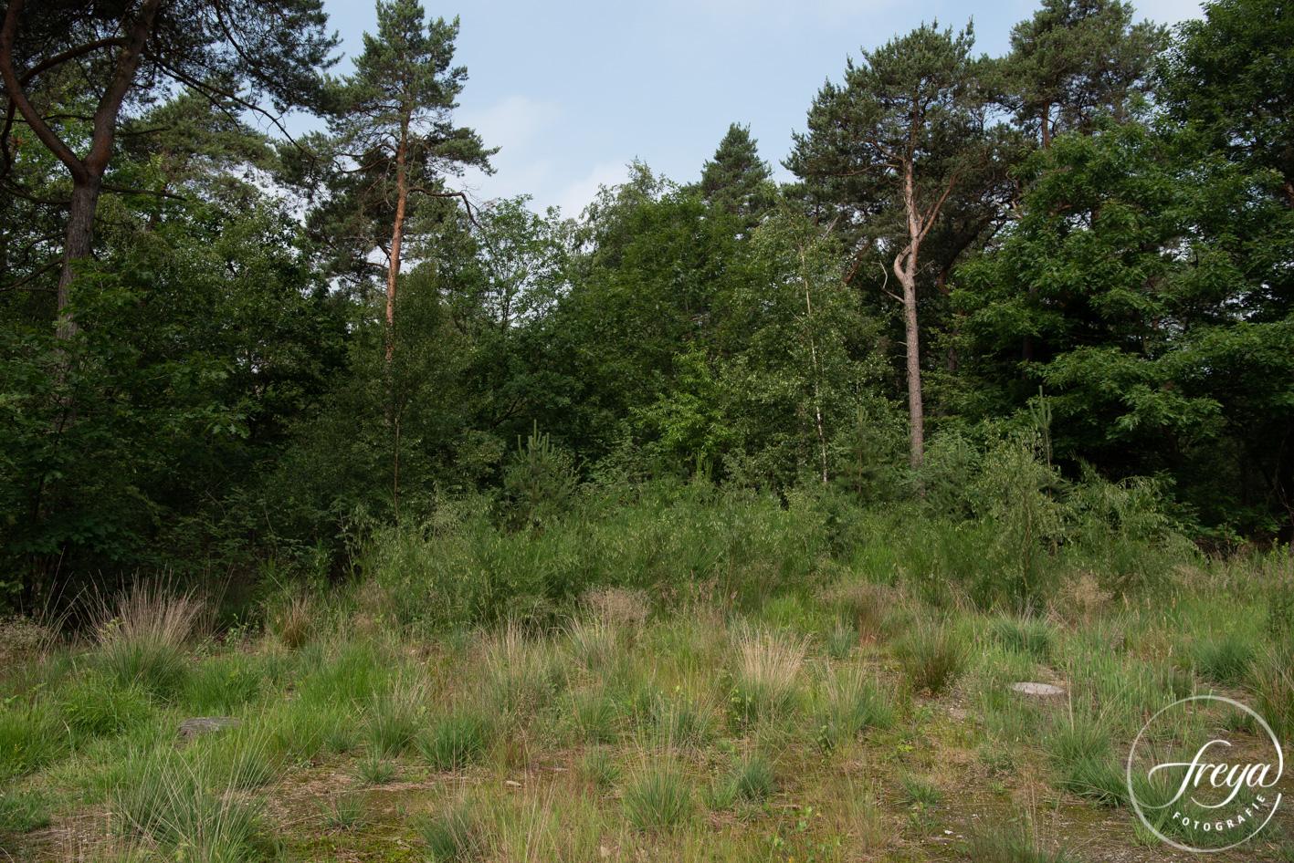 Natuurbegraafplaats Maashorst te Schaik - boomschijven in het gras